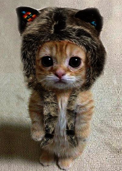 I M Walking Out Of The Common Room Holding My Cat I Start Laughing And Bump Into You My Kitten Falls And Holds O Cute Animals Kittens Cutest Cute Baby Animals