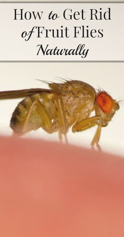 25 Housekeeping Tips From Grandma You Ll Wish You Known About Sooner Fruit Flies Cleaning Recipes Natural Cleaning Products