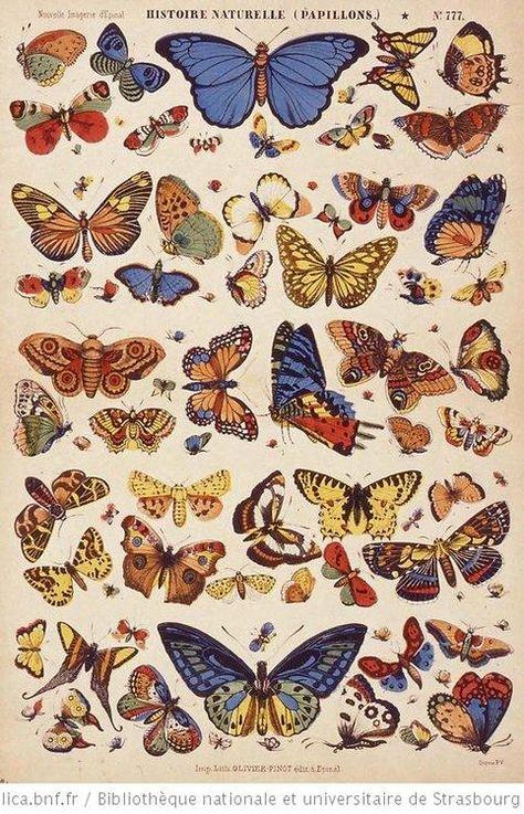 Illustration scientifique - Scientific Illustration plus beaux papillons. Art Du Collage, Photo Wall Collage, Picture Wall, Inspiration Art, Art Inspo, Wall Prints, Poster Prints, Poster Wall, Art Papillon