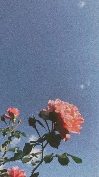 Matthew Gray Gubler Tumblr In 2020 Laptop Wallpaper Red Roses Wallpaper Aesthetic Desktop Wallpaper