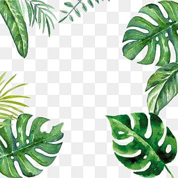Gambar Daun Sawit Daun Sawit Seni Klip Daun Clipart Png Dan Psd Untuk Muat Turun Percuma In 2021 Palm Tree Photography Flower Border Plant Wallpaper