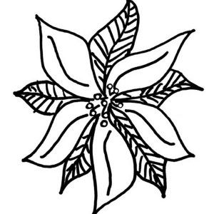 Beautiful Picture Of Poinsettia Coloring Page Color Luna