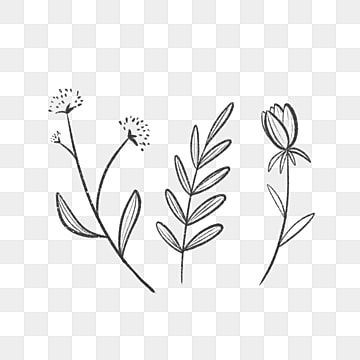 Three Simple Lined Leaves And Flowers Drawing Nature Leaf Png Transparent Clipart Image And Psd File For Free Download Como Desenhar Maos Desenho Floral Folha Desenho