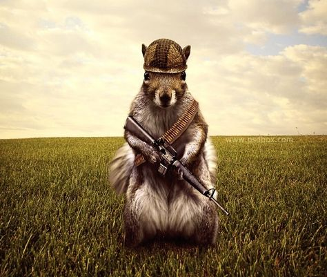 Tuto Preview Tutoriale Pinterest Squirrel And Photoshop - Squirrel photographed in heroic pose becomes star of hilarious photoshop battle