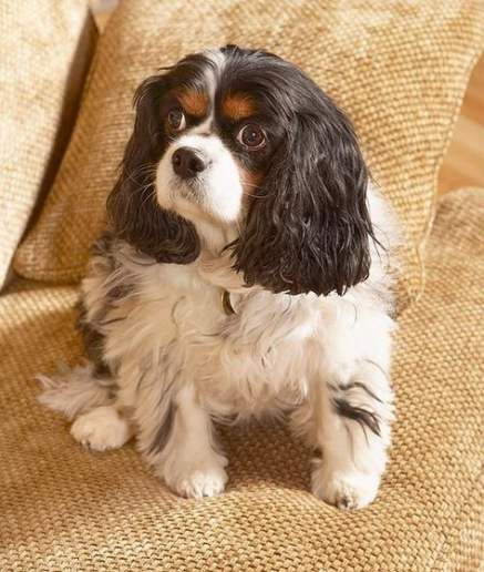 Dogs Breeds For Apartments Sweets 26 Ideas Dog Breeds Medium Dog Breeds Apartment Dogs