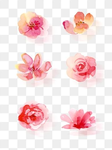 Plum Petals Plum Flower Red Branches Png Transparent Clipart Image And Psd File For Free Download Flower Drawing Hand Drawn Flowers Pink Flowers Background