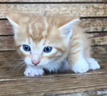 Pumpkin Pet Adoption Cute Animals Animals
