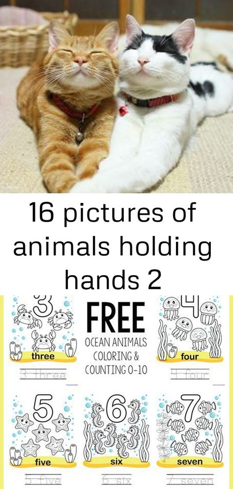 :) BFF's Gotta love your friends @Jordan Colby... if we were cats :) hahaha i can just picture us doing those faces now!  #cats #cutecats cats | cat cute | cute cats and kittens |cat beautiful | cat lovers Free Ocean Animals Coloring and Counting 0-10 #1plus1plus1 #homeschool #homeschoolers Picture book for habitats. We spend so much time teaching our young children about animals that don't live in our climate and often forget those that are around us.