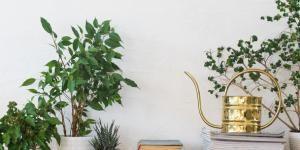 Cómo Cuidar Un Ficus Benjamina Jardineria Y Plantas Plantas Colgantes De Sol Plantas