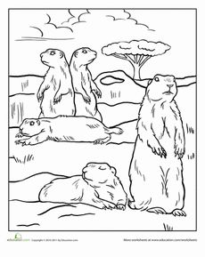 Color The Prairie Dogs