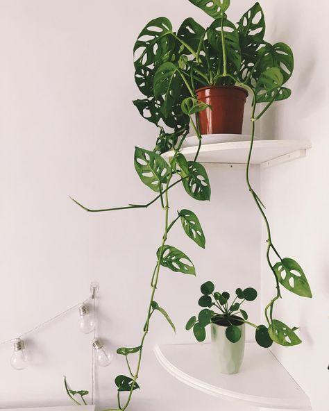 Friends Houseplants Pilea Plantas De Interior