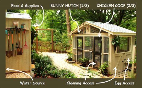 Chicken Coop Design Considerations
