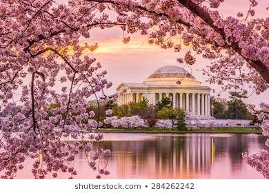 Washington Dc Most Beautiful Cities Cherry Blossom Festival Cherry Blossom Festival Dc