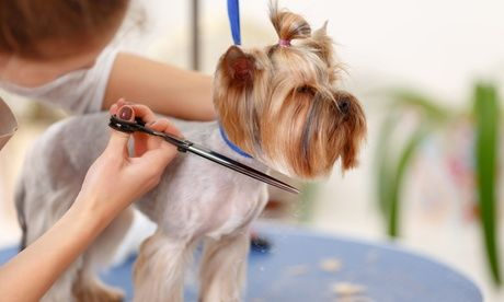 Grooming For A Bird Cat Or Dog At Pet Animals Trading Up To 60 Off Pet Grooming Services Traffic Titan Pro Social Dog Grooming Supplies Dogs Dog Grooming
