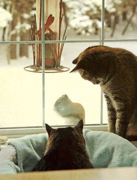 Image #17: Cats, cats and... cats! (part 4)