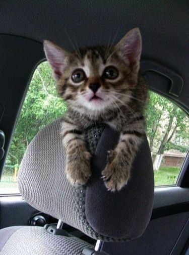 Kittens For Sale Temecula Also Kittens For Sale Ri An Coloring Pages For Cute Animals Once Kittens And Puppies N Kittens Cutest Super Cute Kittens Cute Cat Gif