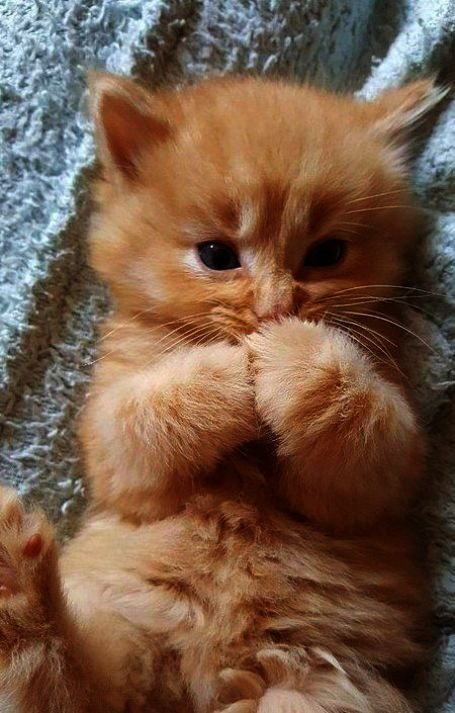 Get Some Kittens For Sale Near Me Xo Cute Animals Cute Cats Cute Baby Animals