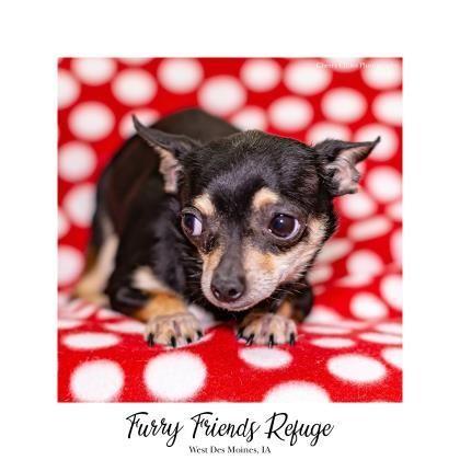 Mugsie Pet Adoption Pet Search Adoption