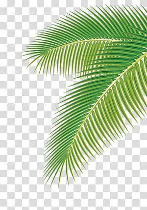 Arecaceae Leaf Euclidean Palm Leaf Green Palm Leaf Transparent Background Png Clipart Green Leaf Background Leaf Images Leaves Illustration