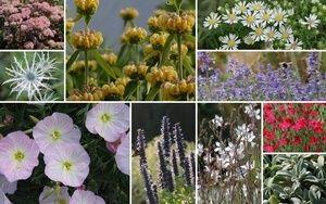Staudenbeet Genugsame Schonheiten Zum Nachpflanzen 10 Pflanzen Pflanzen Staudenbeet Garten Pflanzen