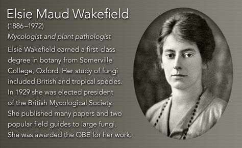 Elsie Maud Wakefield(1886u20131972) Mycologist and plant pathologist - first class degree