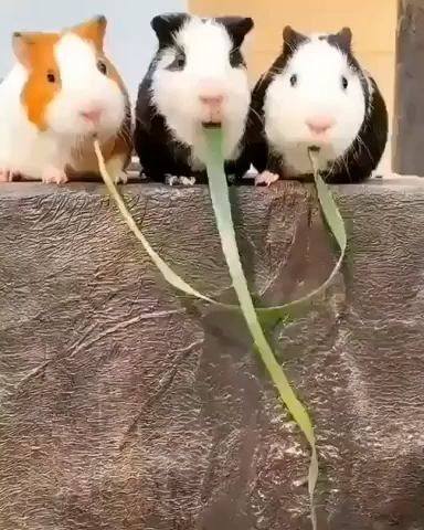This Is NOT Lady And The Tramp Guys  😙🌱