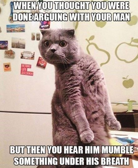 27 Caturday Memes To Enjoy While Relieving Yourself At The Litter Box Good Morning Funny Pictures New Funny Memes Very Funny Pictures