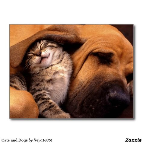 Cats and Dogs Postcard