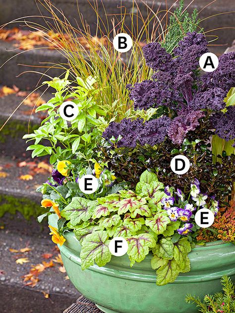 A. Kale 'Purple Lacinato': The deep purple hardy annual  B. Carex 'Orange Sedge': Zones 7-10 C. Sundance Choisya: Glossy green adds texture to designs. Zones 7-10 D. Coprosma 'Roy's Red':  Zones 9-11 E. Viola sorbet mix: These annuals will keep blooming through fall and into winter. F. Heucherella 'Stoplight':  Zones 4-9