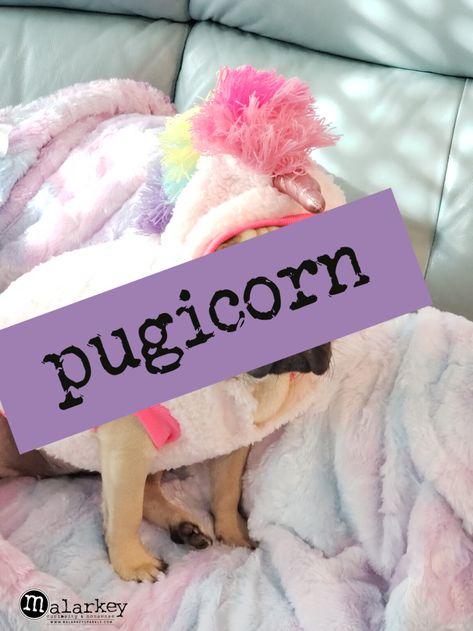 malarkey moments - daily shenanigans ⋆ malarkey - Santa brought us a unicorn!!!!! At first she was not a fan... but she seems to be warming up to it.... I think! She is so friggin' cute!!!! . #pug #pugs #pugsofinstagram #dogs #dogsofinstagram #honey #honeythepug #ilovedogs #causesheiscute #cutedogs #pugsarecute #pugsnotdrugs #puglife #snugglepug #pugsnuggles #pugeyes #puggyeyes