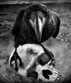 Raven & the Skull #poe #gothic #nevermore