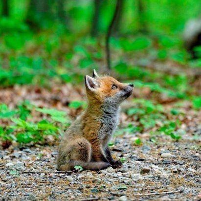 Pin Von Barbara Rathmanner Auf Fuchskinder Tiere Susse Tiere Wilde Tiere