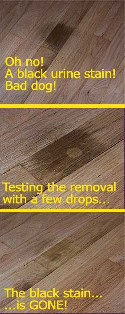 Best Of Cleaning Pet Urine Stains From, How To Get Urine Stain Out Of Laminate Flooring