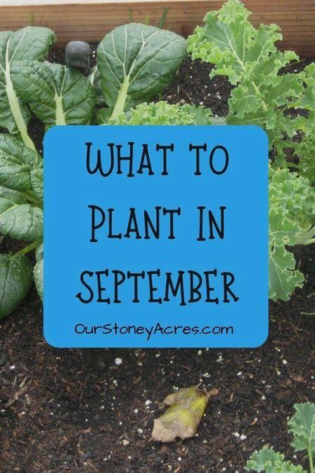 18+ Gemuese im september pflanzen ideen