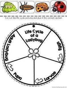Ladybug Life Cycle Craftivity Ladybug Life Cycle Wheel