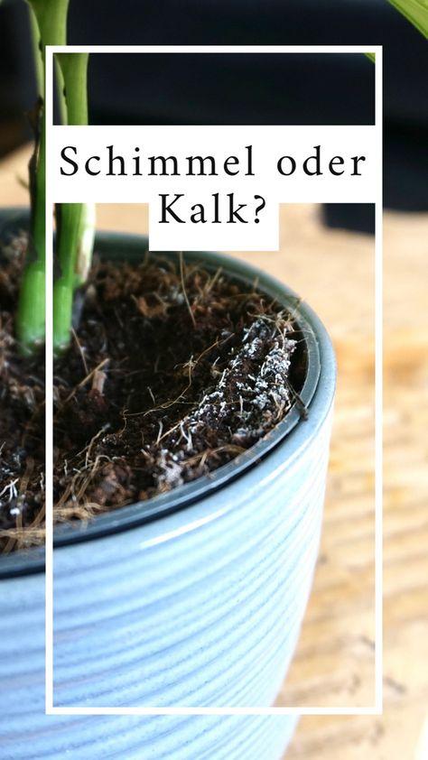 Schimmel Oder Kalk Bei Zimmerpflanzen Pflanzen Pflanzen Umtopfen Pflanzen Pflege