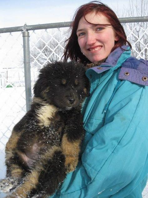 List of Pinterest tibetan mastiff puppy images & tibetan mastiff