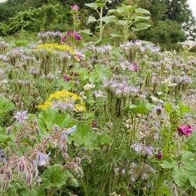 Buffet Pour Insectes Sativa Rheinau Semences Biologiques