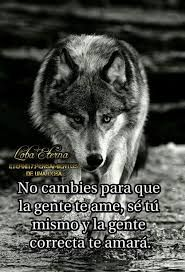 Imagen relacionada con imgenes  Frases de lobos Lobos Frases
