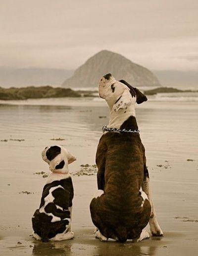 Thefullerview Hunde Fotos Tierbilder Hundebilder