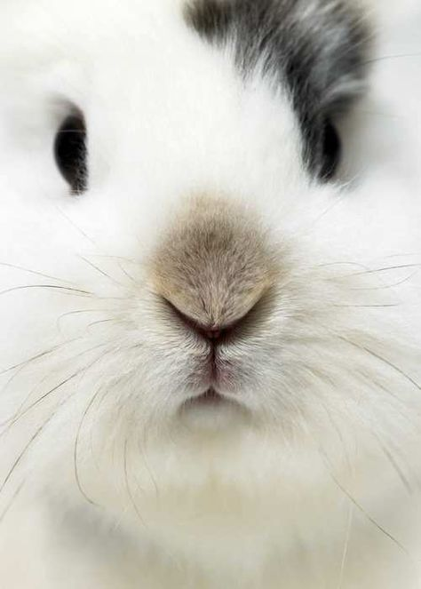 Bunny Nose....I want to draw this cute face!