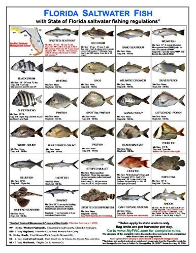Tackle Box I D Florida Fish Identification Card Set Three Cards 59 Common Fish 17 Common Sharks New Feb 1 2020 Spotted Seatrout Rules And Zones Outdo Florida Fish Fish Chart Saltwater