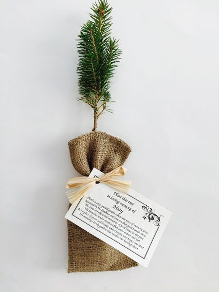 What an awesome funeral gift. Have friends and family grow trees ...