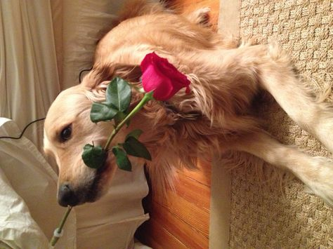 Will Ya Hurry Up Take This Rose The Thorns Are Killing My