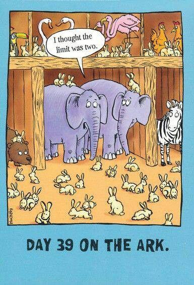 """Image result for rabbit breeding joke"""""""