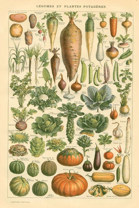 The Sum Of All Crafts: image collection - botanical vegetable illustrations