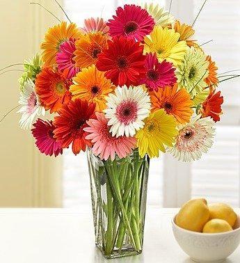 Two Dozen Gerbera Daisies With Clear Vase In 2020 Daisy Flower Arrangements 800 Flowers Gerbera Daisy