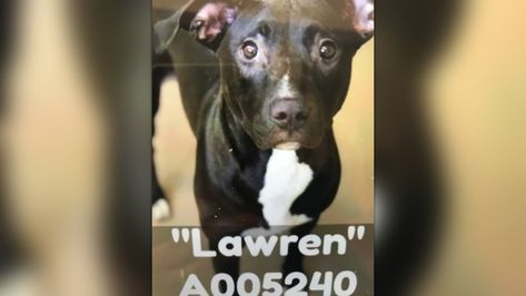 A005240 Lawren Urgent Kill List For Space Clayton Co Ac By Partners For Pets Inc Personal Fundraising Personal Goal Setting Fundraising Goals