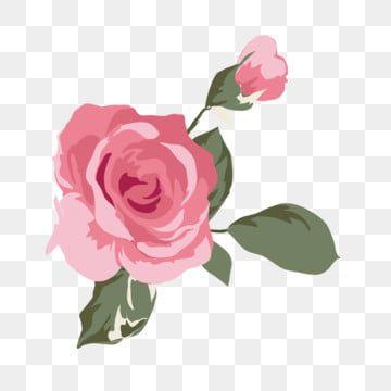 Nuit Rose Png Fond Png Telechargement Gratuit Nuit Fond Rose Contexte Image Png Pour Le Telechargement Libre Guirnaldas Florales Florecer Rosas