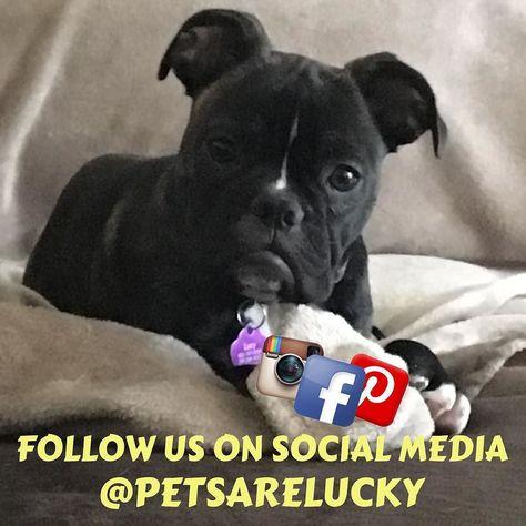 dogsofinstagram Join us on social media and...